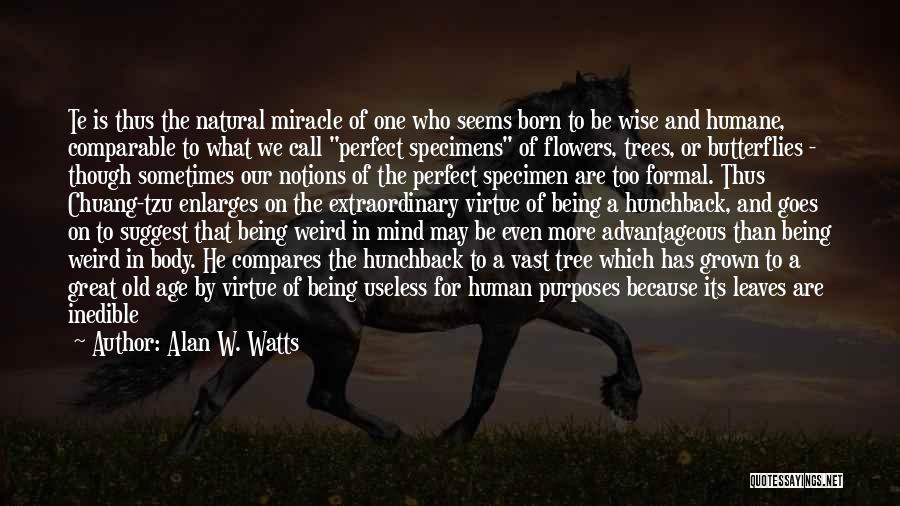 Flowers And Butterflies Quotes By Alan W. Watts
