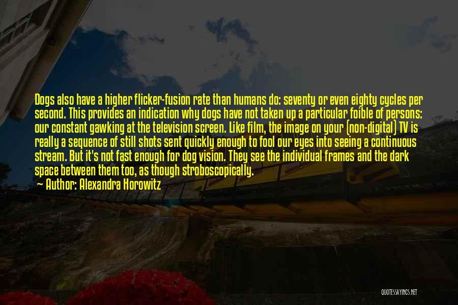 Frames Quotes By Alexandra Horowitz