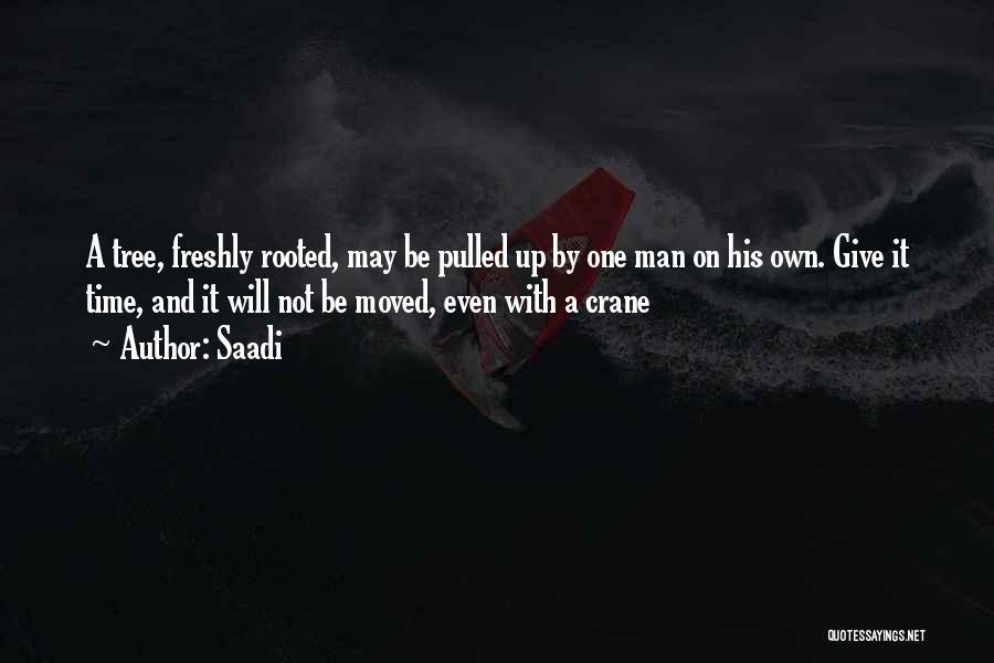 Freshly Quotes By Saadi