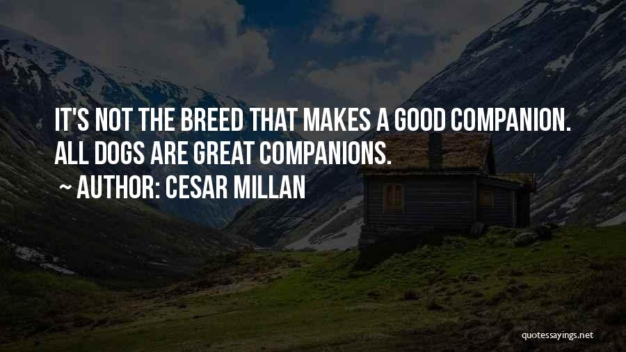 Great Companions Quotes By Cesar Millan