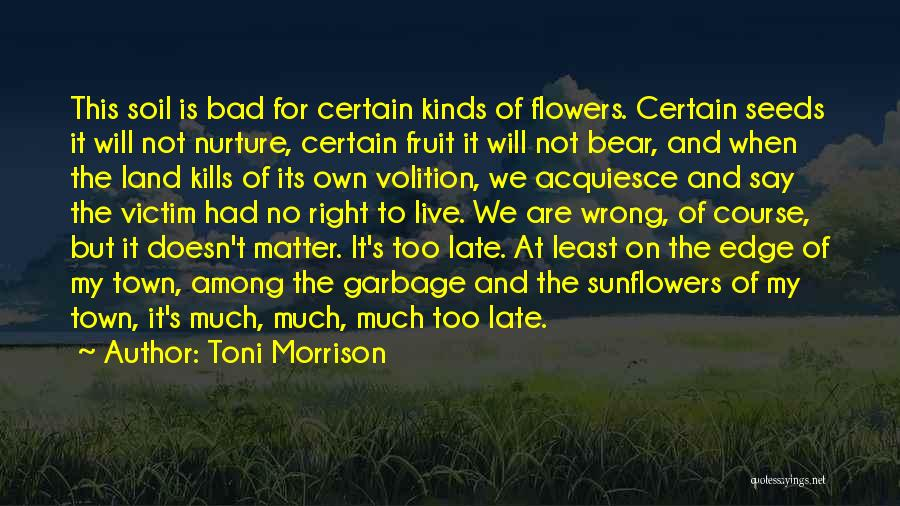 Harsh Truth Quotes By Toni Morrison