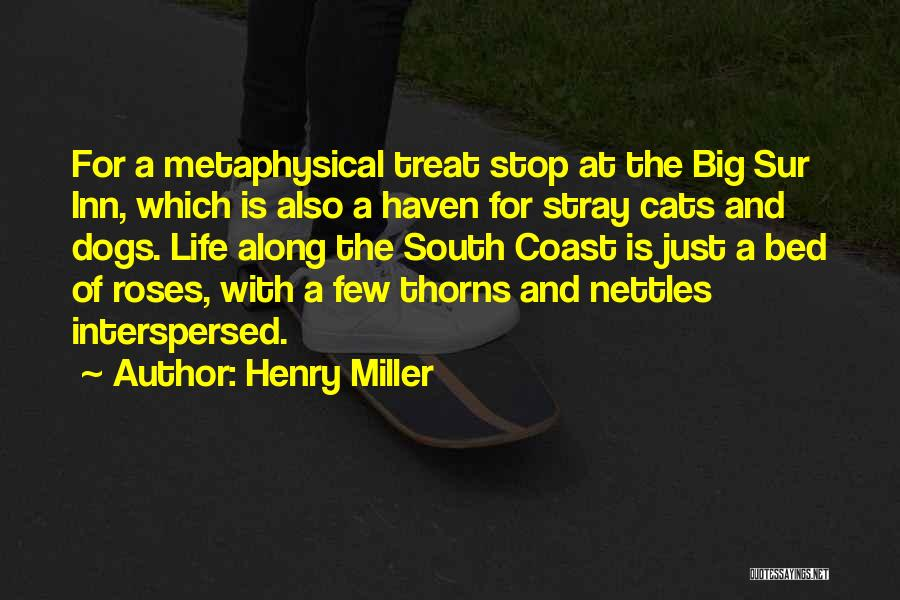 Henry Miller Quotes 2102593