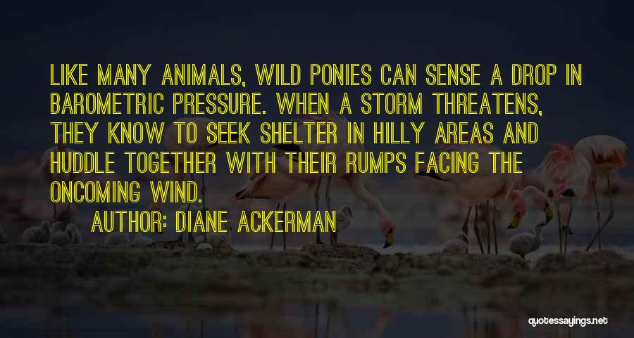 Hilly Areas Quotes By Diane Ackerman