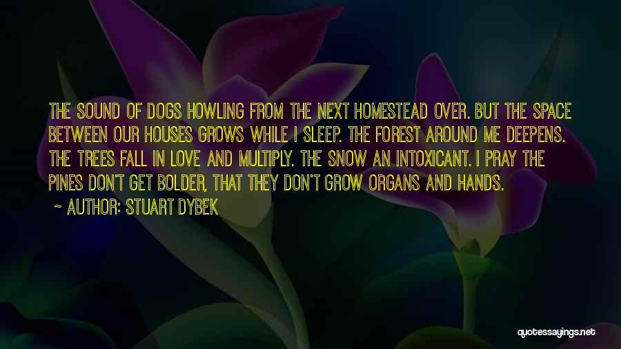 Homestead Quotes By Stuart Dybek
