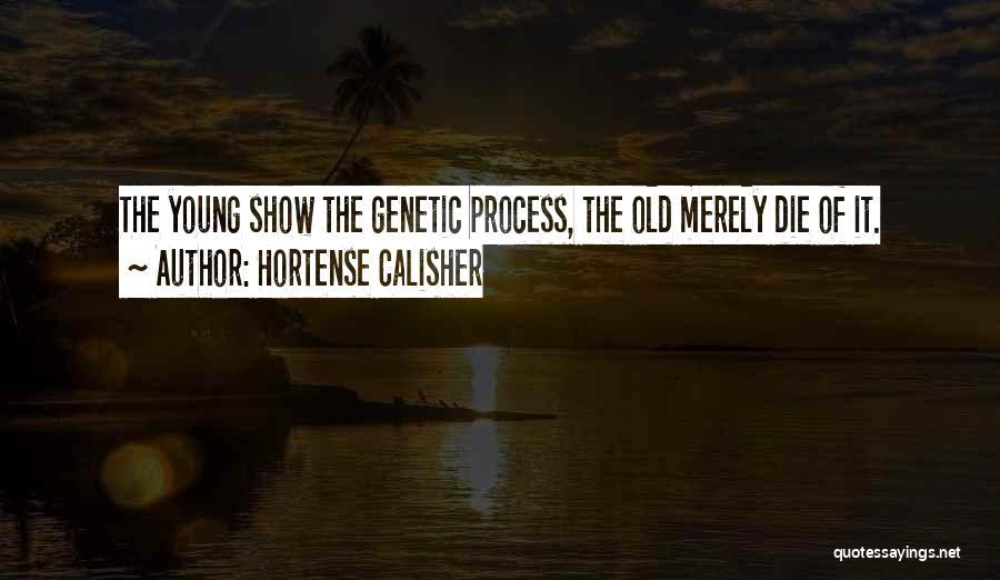 Hortense Calisher Quotes 205222