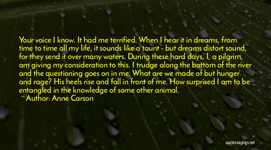 Hunger For Knowledge Quotes By Anne Carson