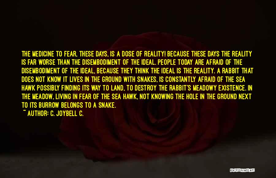 Ideal Society Quotes By C. JoyBell C.