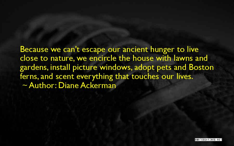 Install Quotes By Diane Ackerman
