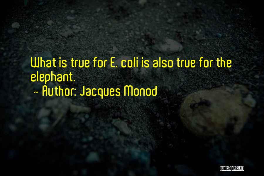 Jacques Monod Quotes 2242646