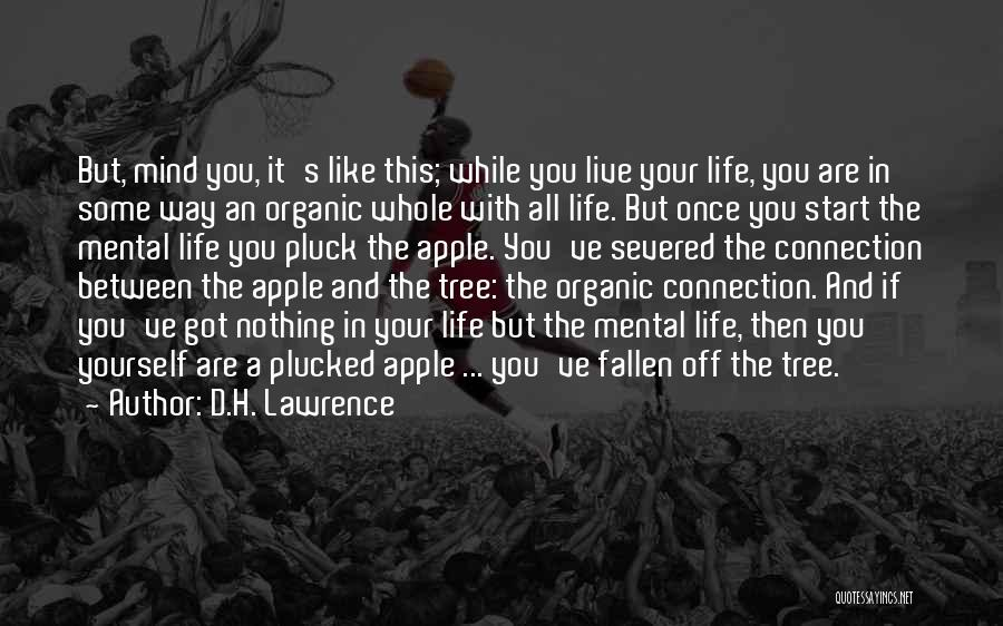 Life Like A Tree Quotes By D.H. Lawrence