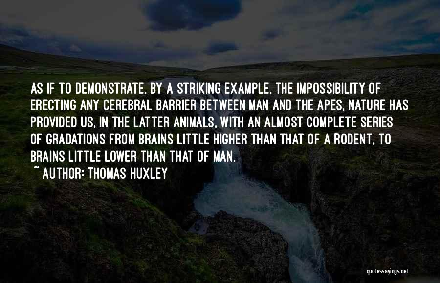 Little Brains Quotes By Thomas Huxley