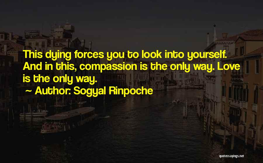 Look Into Yourself Quotes By Sogyal Rinpoche