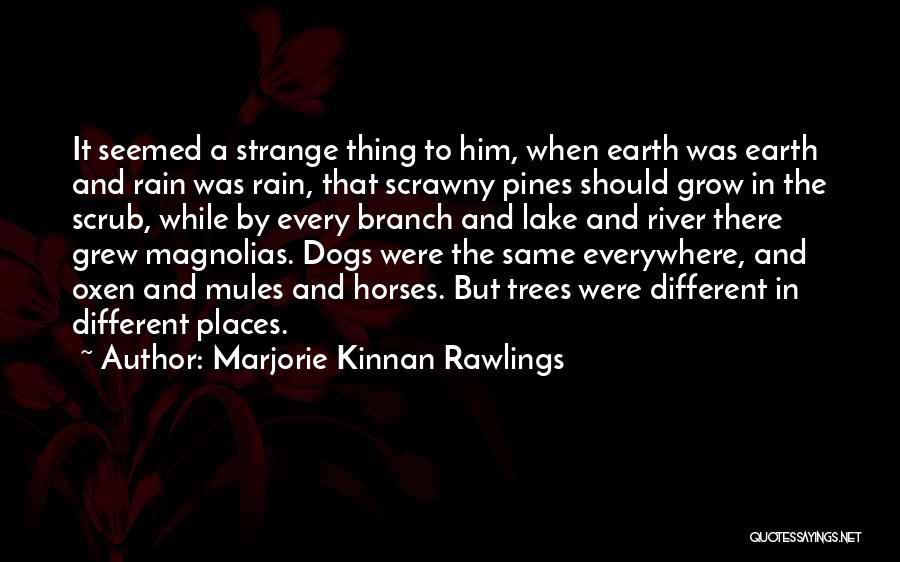 Marjorie Kinnan Rawlings Quotes 1493156