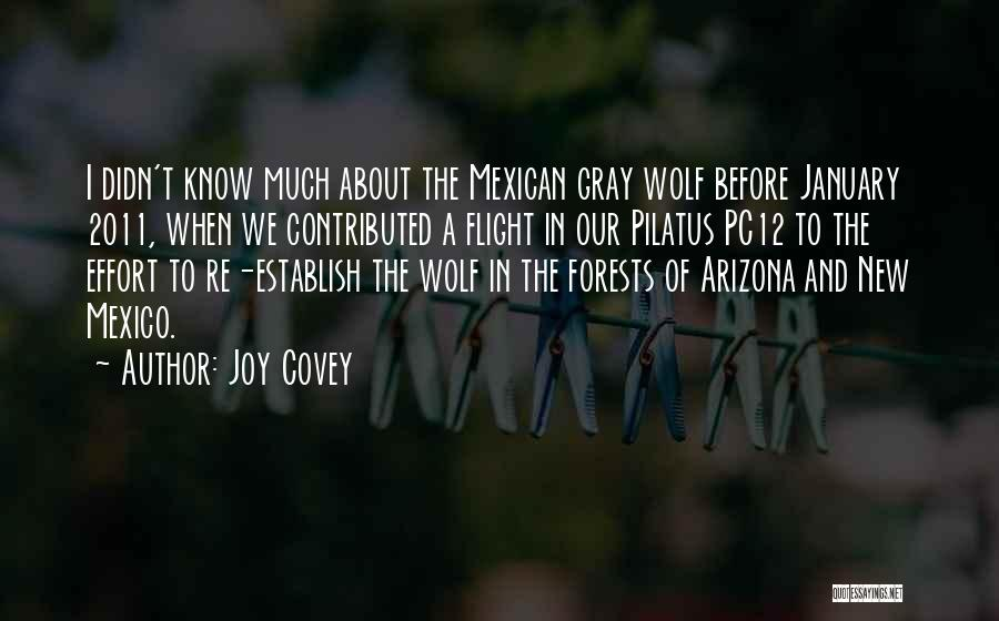 Mexican Quotes By Joy Covey