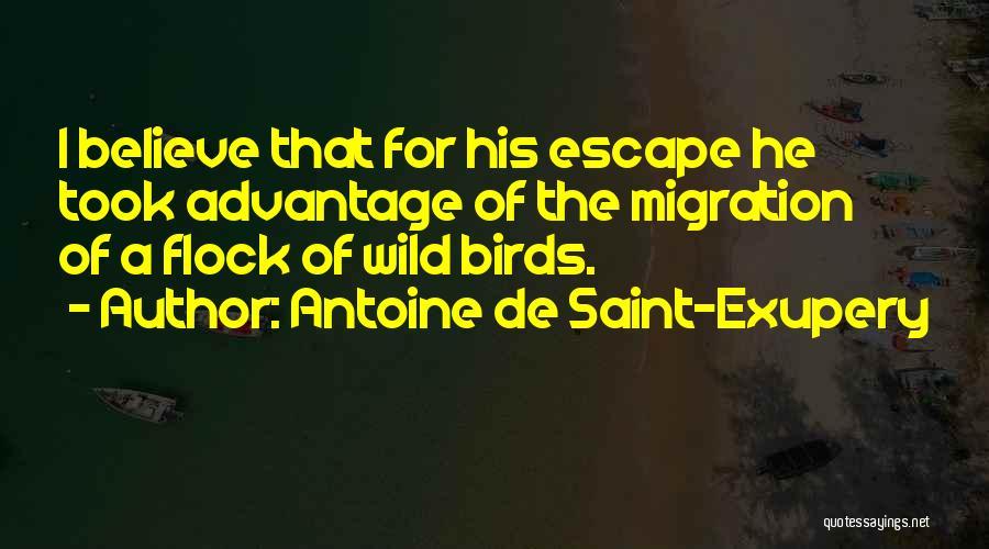 Migration Of Birds Quotes By Antoine De Saint-Exupery