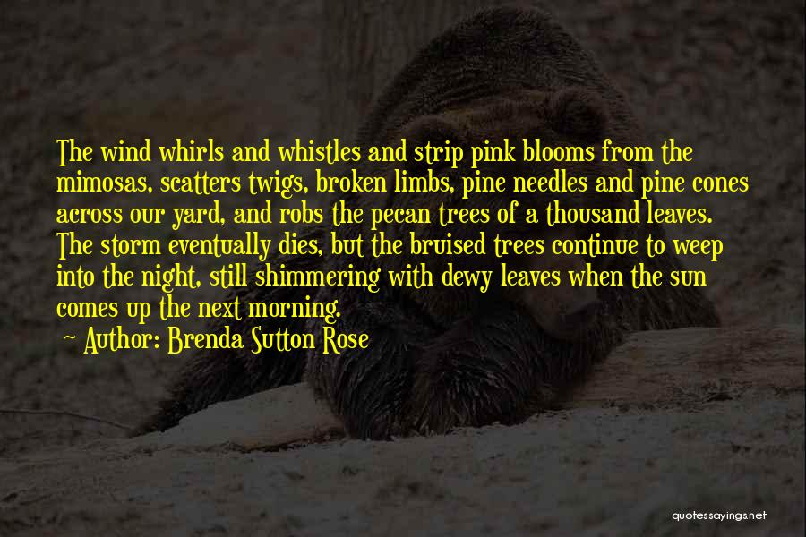 Morning With Nature Quotes By Brenda Sutton Rose