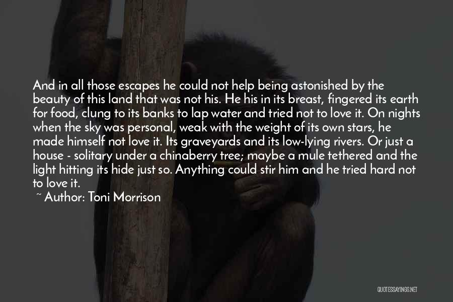 Nights With Him Quotes By Toni Morrison