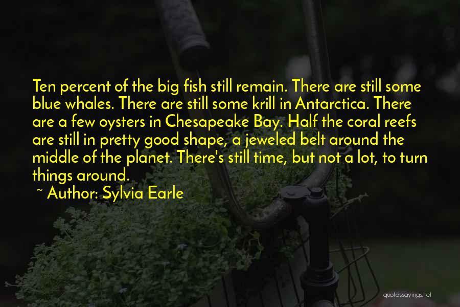 Oysters Quotes By Sylvia Earle