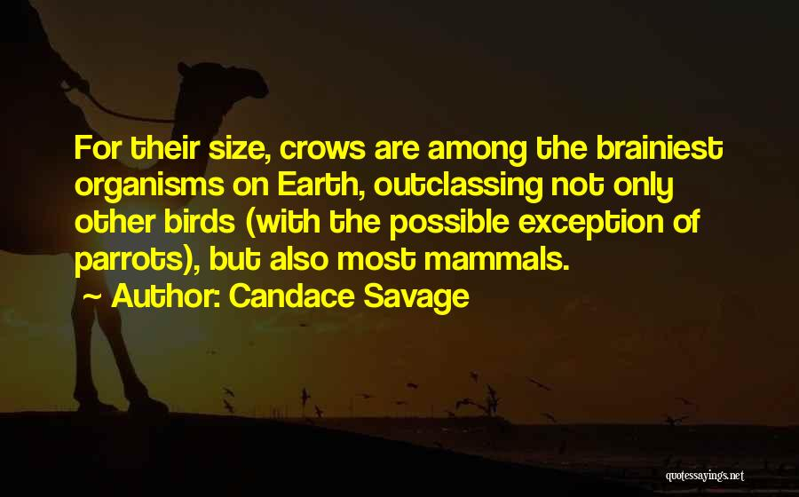 Parrots Quotes By Candace Savage