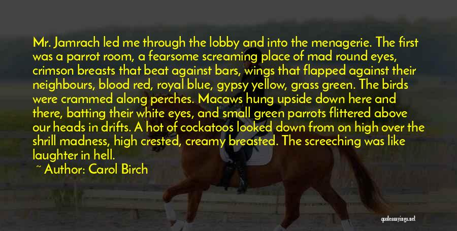 Parrots Quotes By Carol Birch