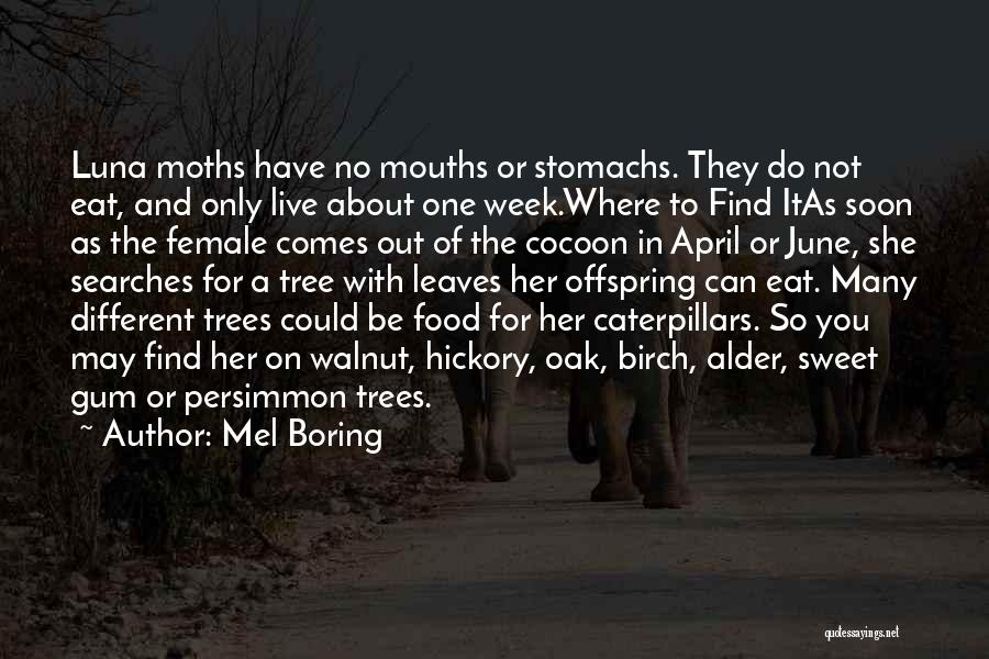 Persimmon Tree Quotes By Mel Boring