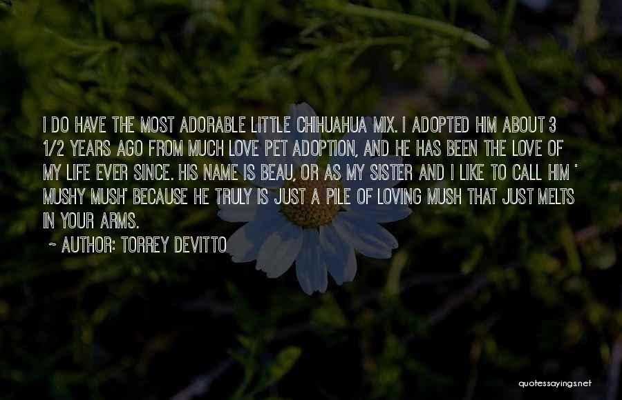 Pet Love Quotes By Torrey DeVitto