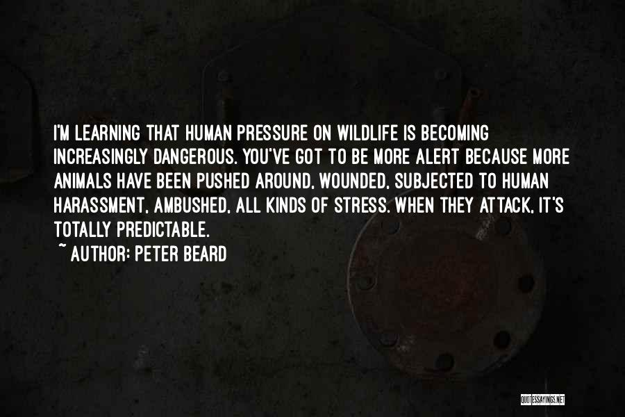 Peter Beard Quotes 1174094
