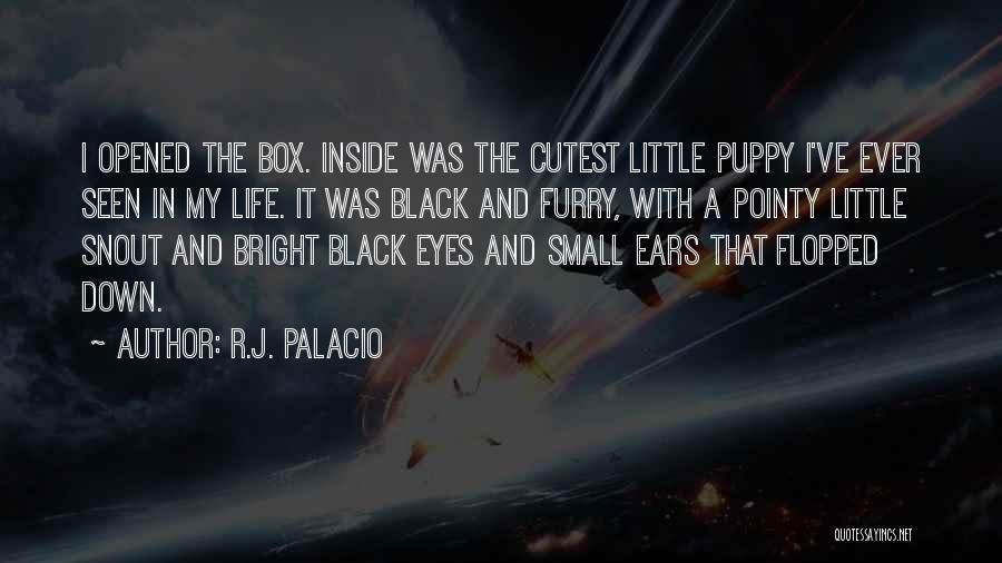 R.J. Palacio Quotes 384312