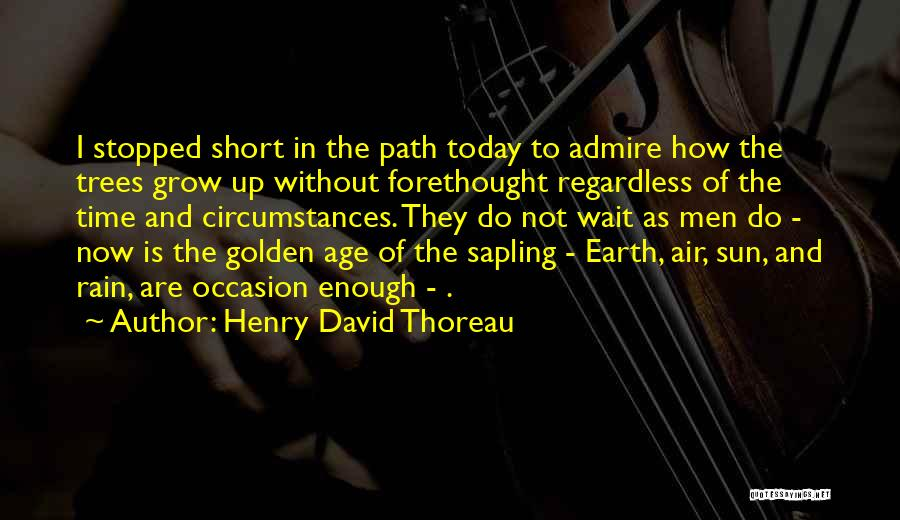 Rain And Trees Quotes By Henry David Thoreau