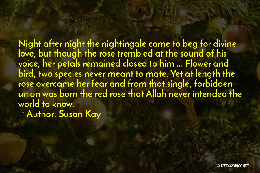 Red Rose With Love Quotes By Susan Kay