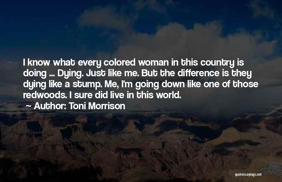 Redwoods Quotes By Toni Morrison