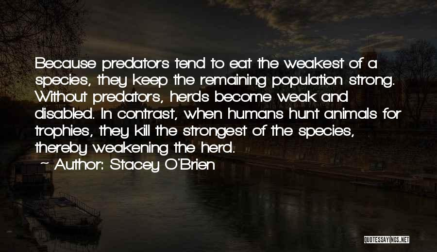 Remaining Strong Quotes By Stacey O'Brien