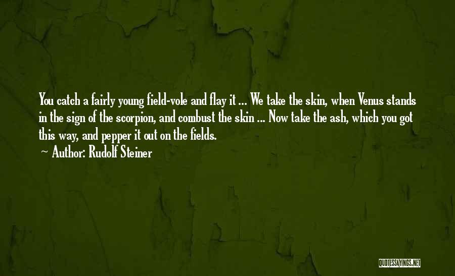 Scorpion Quotes By Rudolf Steiner