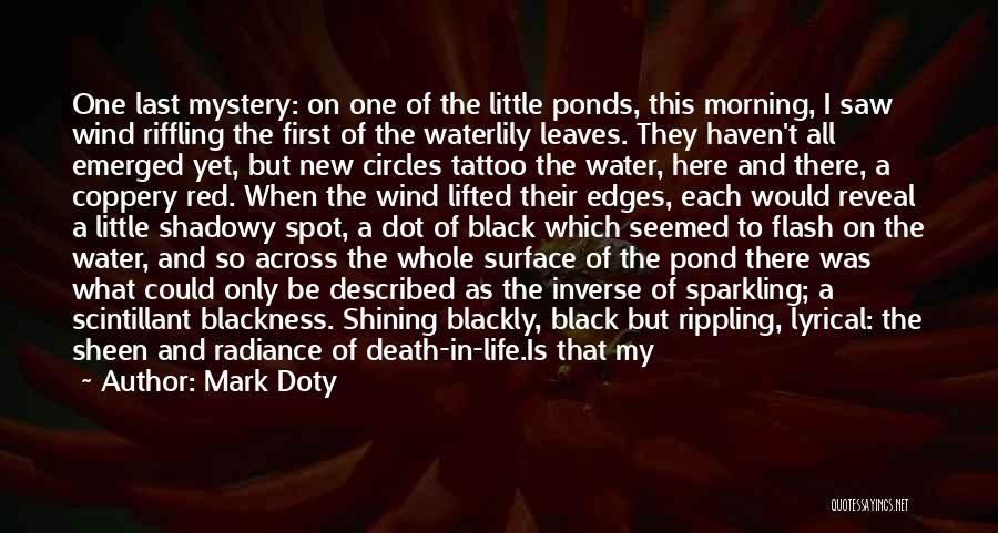 She Sparkles Quotes By Mark Doty