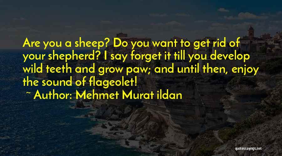 Shepherd And Sheep Quotes By Mehmet Murat Ildan