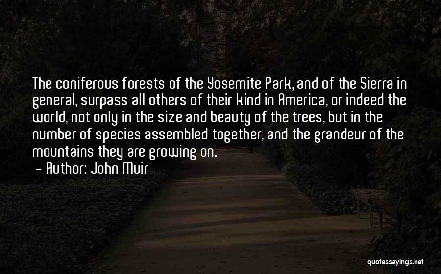 Size And Beauty Quotes By John Muir