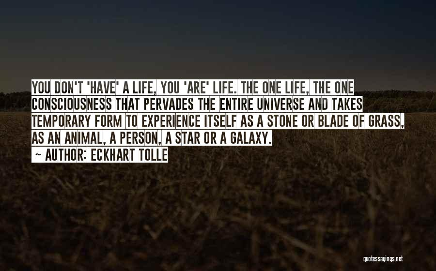 Stones And Life Quotes By Eckhart Tolle