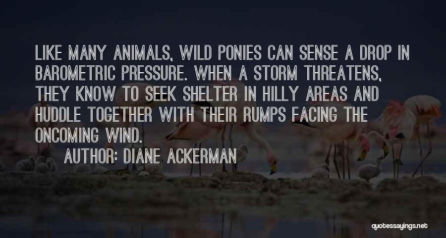 Storm Shelter Quotes By Diane Ackerman