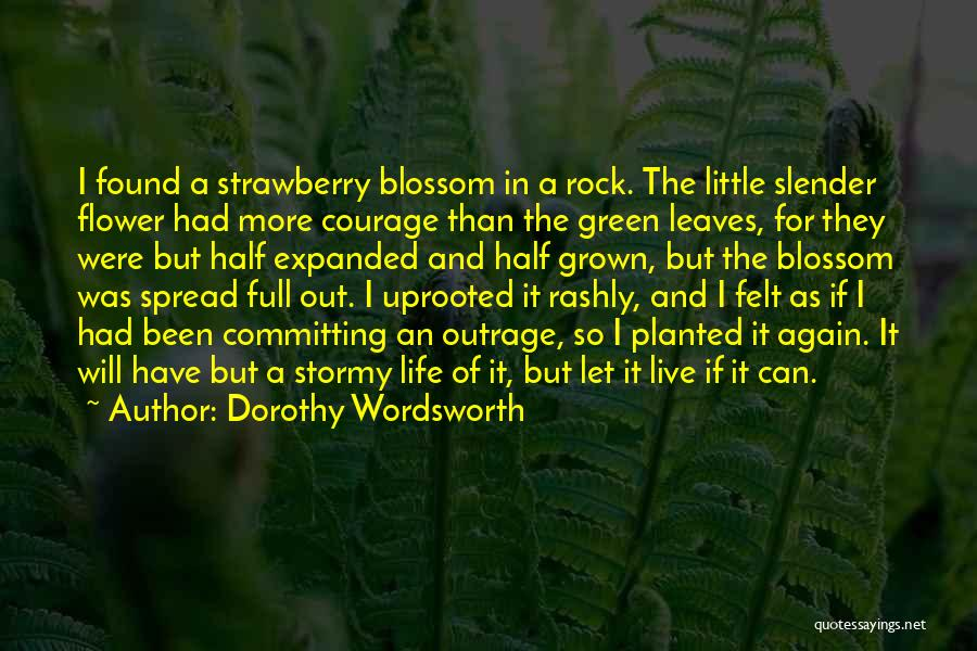 Stormy Life Quotes By Dorothy Wordsworth