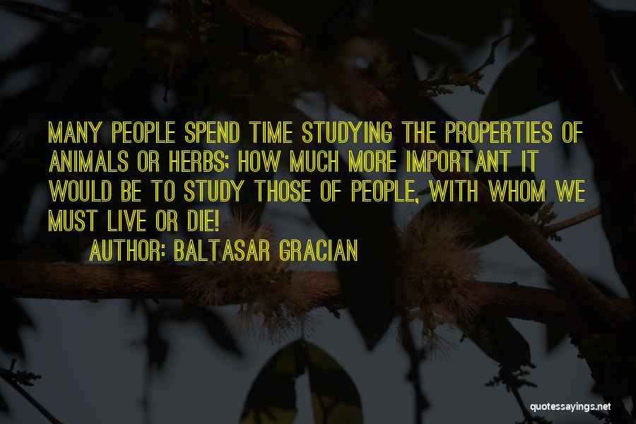 Study Is Very Important Quotes By Baltasar Gracian