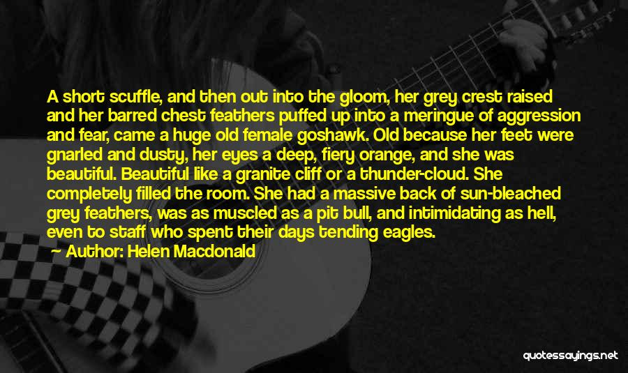 Sun Cloud Quotes By Helen Macdonald