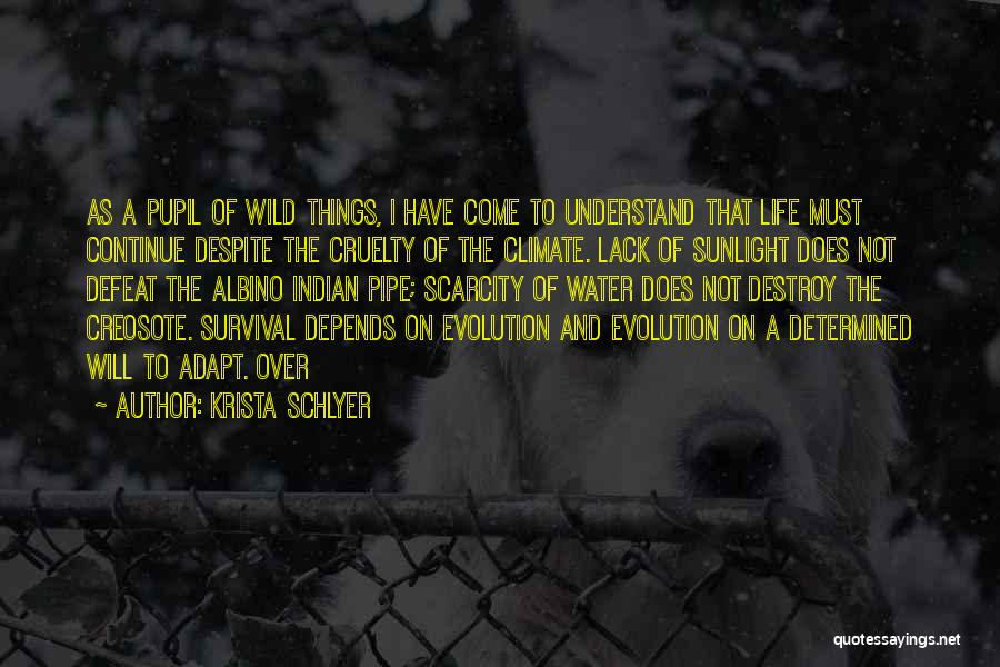 Survival In Into The Wild Quotes By Krista Schlyer