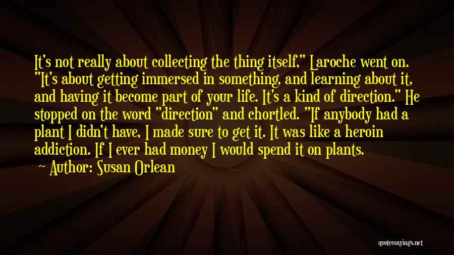 Susan Orlean Quotes 1597947