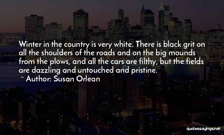 Susan Orlean Quotes 1678060