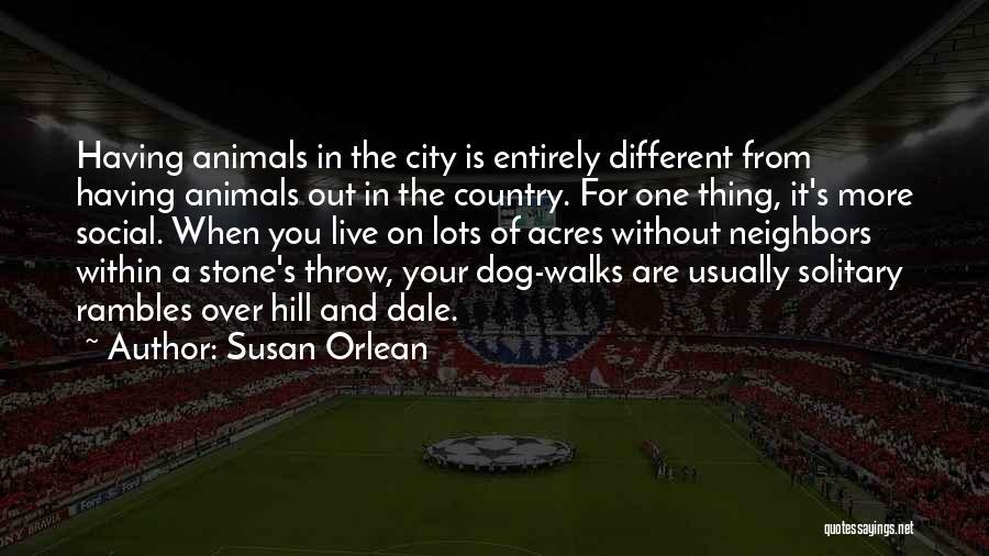 Susan Orlean Quotes 2047106