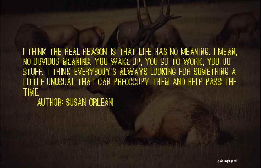 Susan Orlean Quotes 384147