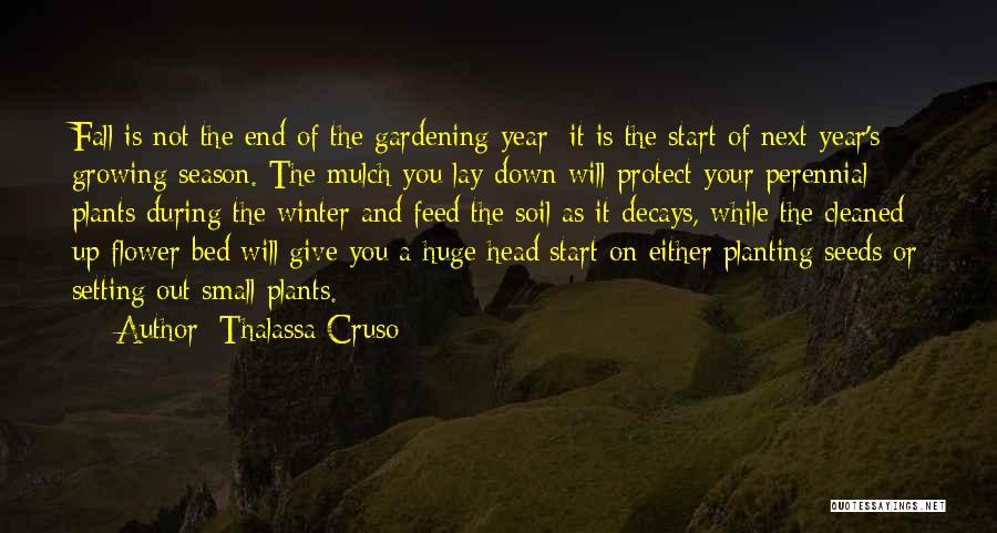 Thalassa Cruso Quotes 534914