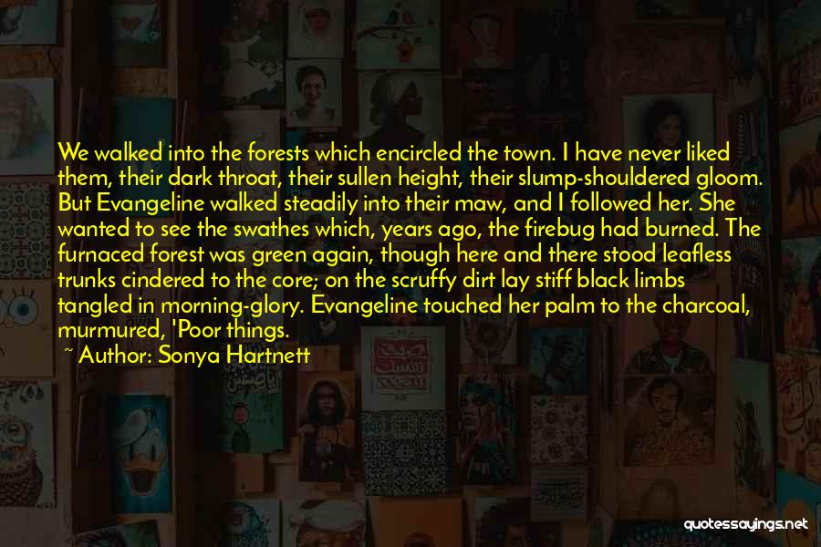 The Black Forest Quotes By Sonya Hartnett