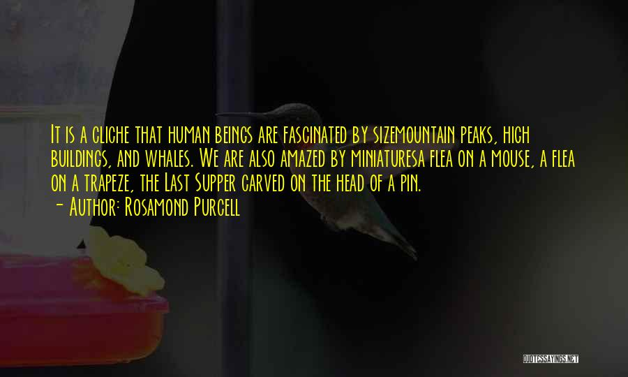 The Last Supper Quotes By Rosamond Purcell