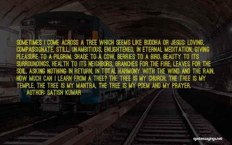 The Rain Poem Quotes By Satish Kumar
